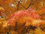 「紅葉」 2012/11/12   高野山