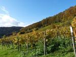 Blick Richtung Lage Südpfalz-Quartier-42