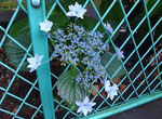 花びらがかわいい♪