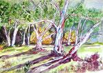 Australische Bäume