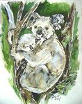 Koala + Baby