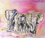Elefanten im Abendlicht