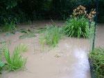 Da ist unser Teich