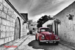 The red beetle - Arequipa - Peru