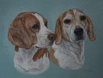 """Beagle """"Tobi und Luna"""" - 2012"""