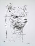 "Alpaka ""Luna"" karikative Umsetzung für Logo"