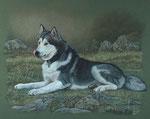 """Alaskan Malamute """"Napanee"""" - 2013"""