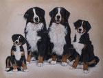 "Berner Sennenhund ""Ole, Lukas, Imke & Estella"" - 2014"