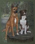 "Rumänische Mischlingshunde ""Akita und Joschi"""