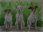"Parson Russell Terrier ""Jessy"", ""Tess"" und ""Kira"""
