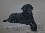 "Labrador ""Anika"" - 2012"