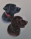 """Labradore """"Buddy und Nelson"""" - 2012"""