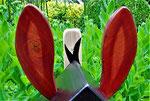 """Houten Nestkastje , """"Nestkastjes in vorm van Ezel , Details, Vogelhuisje bouwen , ezel oren"""