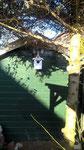 Houten Nestkastje Hond, zwart-wit, Details, Vogelhuisje bouwen, voorkant, eindresultaat, het huisje hangt !