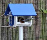 houten voederhuis medium Grieks stijl vogelhuis uniek bijzonder leuk_4