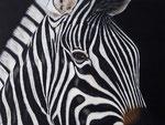 Close-up Zebra Acryl op doek 60 x 80 cm (verkocht)