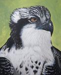 Visarend Acryl op doek 40 x 50 cm
