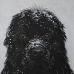 Bram in opdracht Acryl op doek, 50 x 50 cm (verkocht)