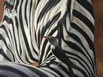 Close up zebra Acryl op doek 70 x 90 cm Prijs op aanvraag