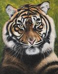 Tijger Acryl op doek 40 x 50 cm