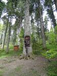 Le sapin président, le plus grand de la forêt
