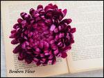 彩菊*ライトパープル