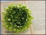 彩菊*グリーン
