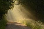 Früh morgens   (Foto:  © Peter Vesely)
