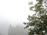 久保柿 /13.10.28