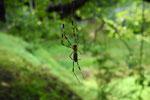 蜘 蛛 /14.08.07