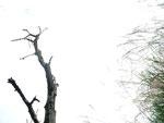 栗と芒 /13.10.27