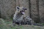 furchterregende Zähne in einem aufgerissenen Maul
