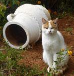 Katze auf Kreta