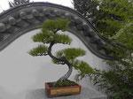 Chinesischer Garten, Botanischer Garten Montreal, Kanada