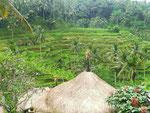 Reisterrassenfelder, Bali, Indonesien