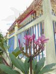 Temple Flower am Wat Puttamongkon in Phuket-Town, Thailand
