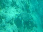 Meeresschildkröte bei St. Bartholomey