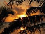 Palmwedel vor Sonnenuntergang auf Westsamoa