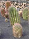 César Manriques Jardin de Cactus, Lanzarote