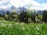 Blick auf die Seiser Alm und den Langkofel, Südtirol
