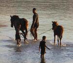 Pferdebaden in der Südsee auf Samoa
