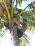 Kokosnussernte auf Samoa