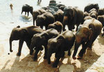 Elefantenwaisenheim in Sri Lanka, Badestunde