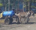 Wassertransporteur mit Eselkarren