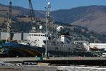 Greenpeaceschiff im Hafen von Christchurch/Neuseeland