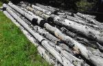 Gefälltes Holz auf der Seiser Alm, Südtirol