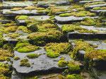 Steindach in einem Museumsdorf nahe Veliko Tarnovo, Bulgarien