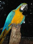 Vogelpark bei Iguassu