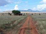 Taita Hills Reserve Kenia