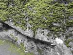Bemooster Stein  im Geirangerfjord, Norwegen
